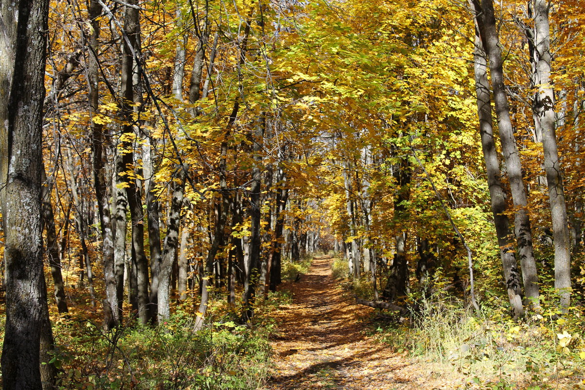 В осеннем лесу - Лариса Коломиец