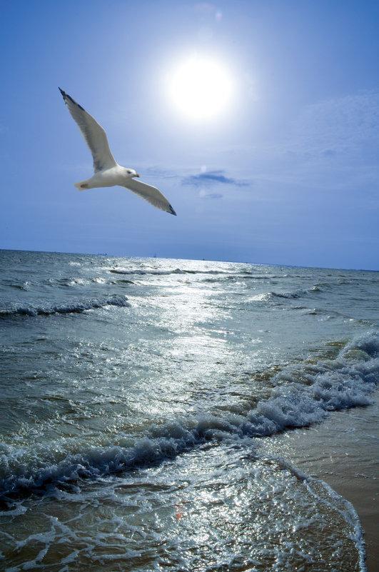море - Евгений Фролов