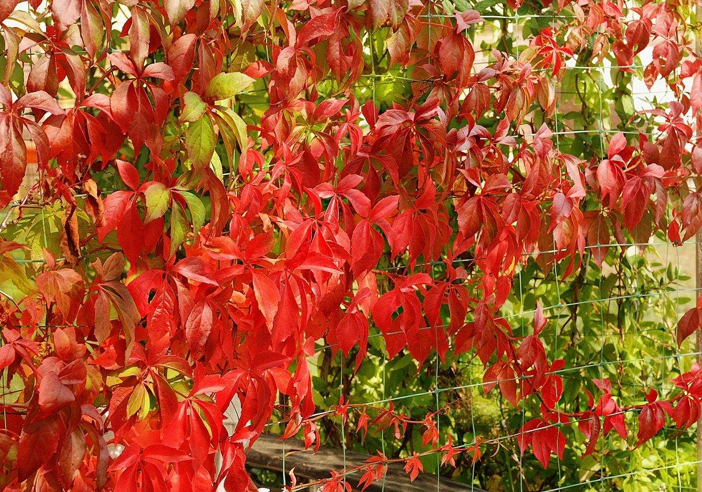 пылает в листьях Осень - Lena