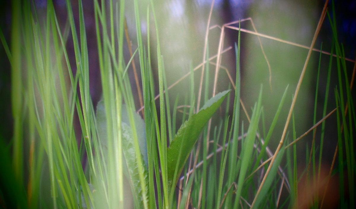 травинки - Лена