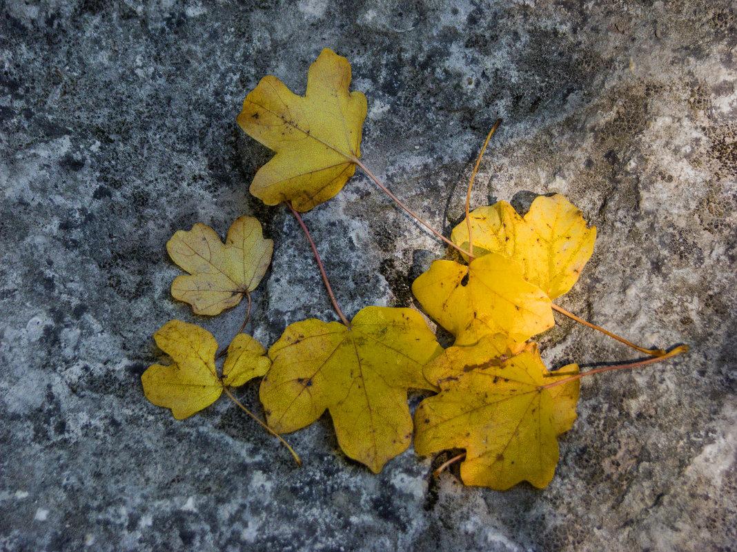 Осенние узоры - Варвара