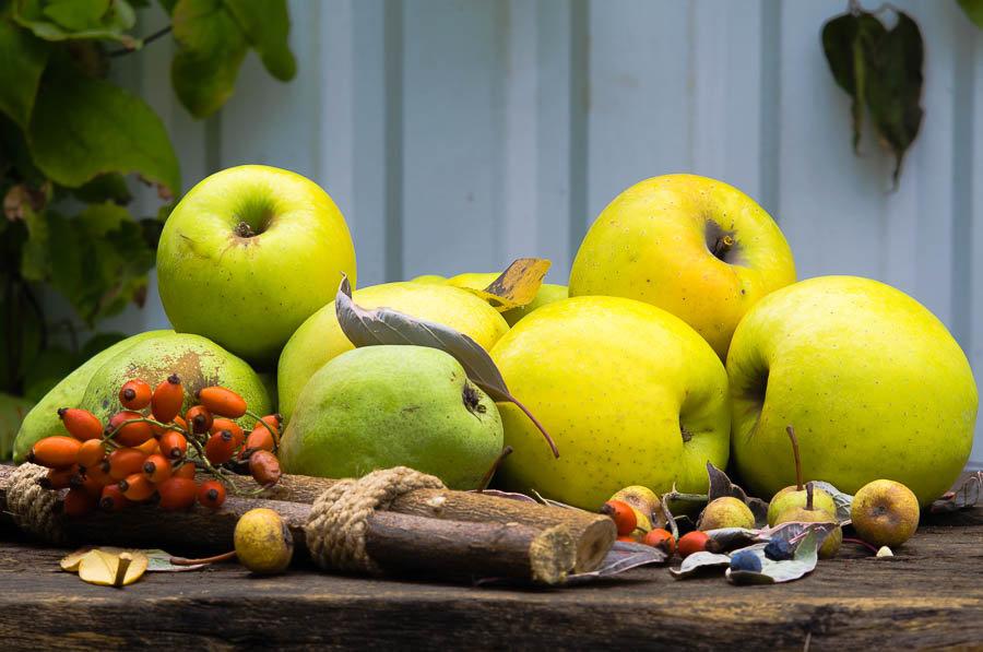 Осенние яблоки. - ния