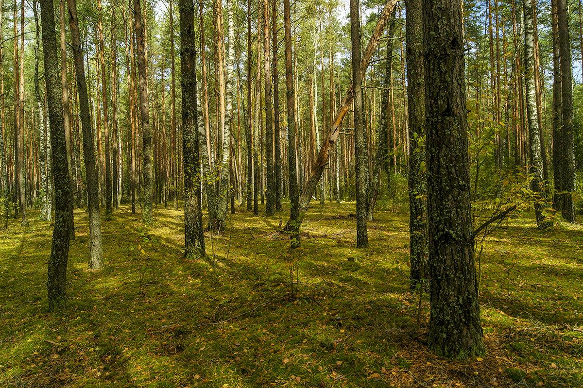 Прогулка по лесу - Игорь Сикорский