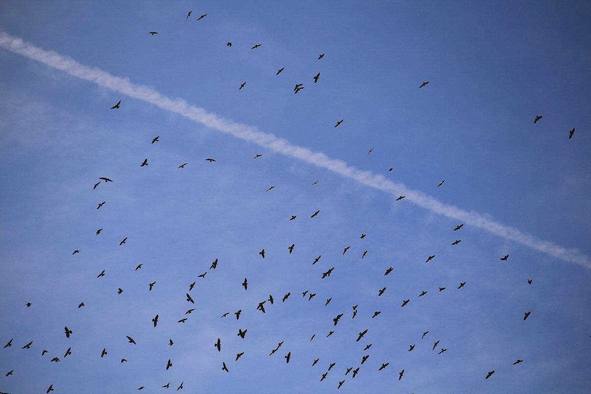 Снова птицы в стаи собираются - Татьяна Ломтева