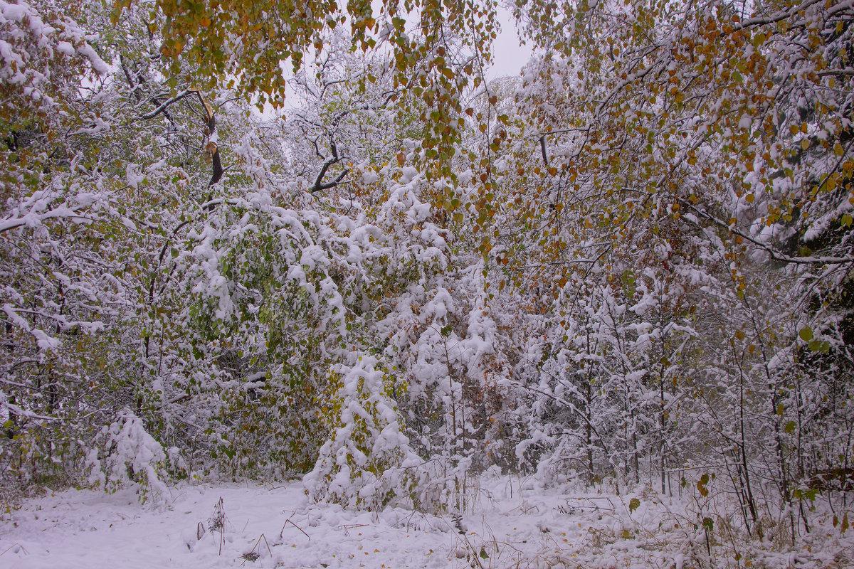 Первый снег---04 - Владимир Холодный