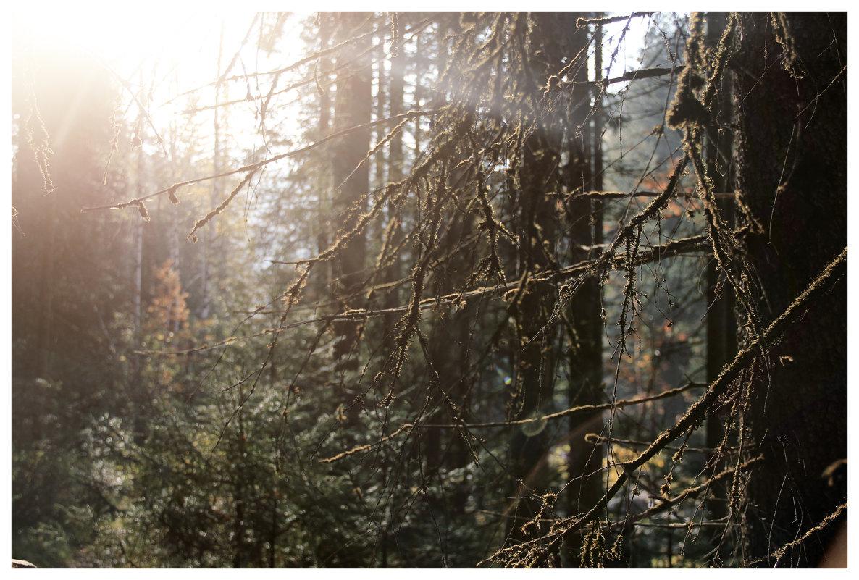 лес - Анастасия