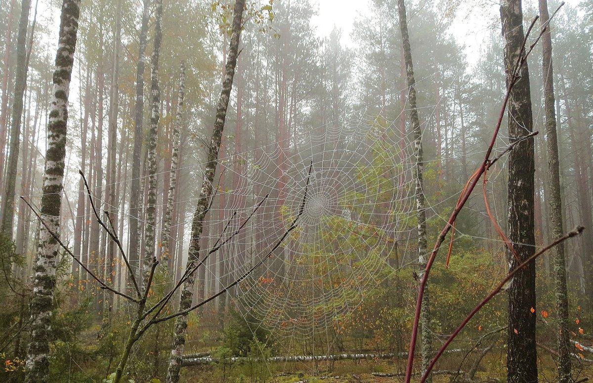 утро в лесу - Виктор _