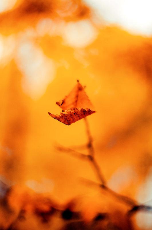 осень так и манит за собой в вечный танец смерти... - Инна