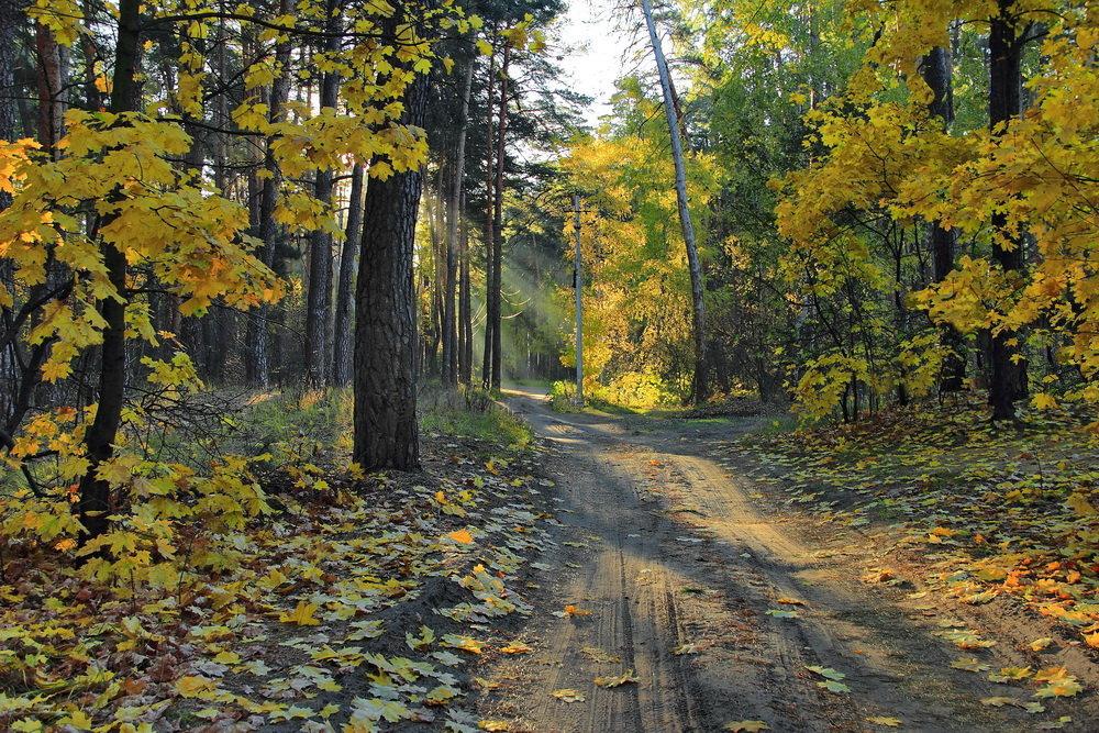 Слушает дорога листопад... - Лесо-Вед (Баранов)