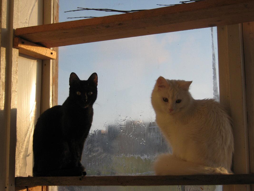 Две кошки у окошка - Татьяна