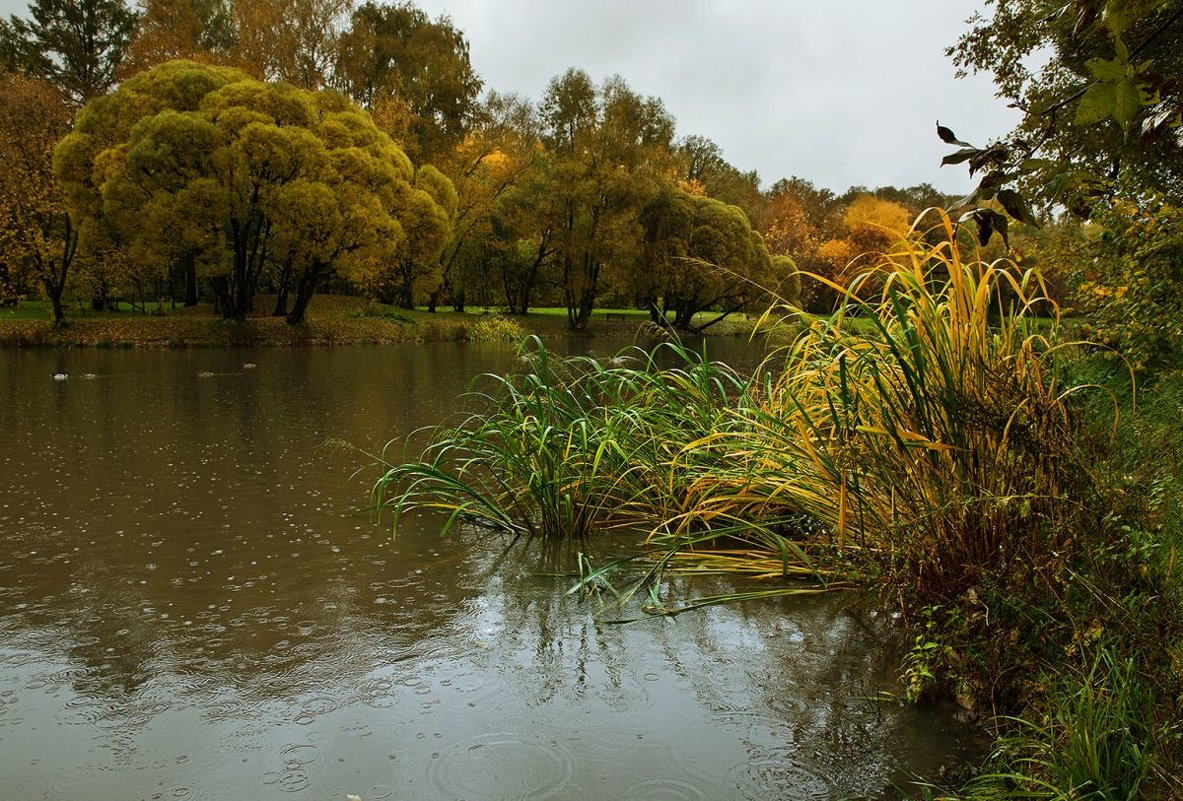 Осенняя песня дождя - Ирина Климова
