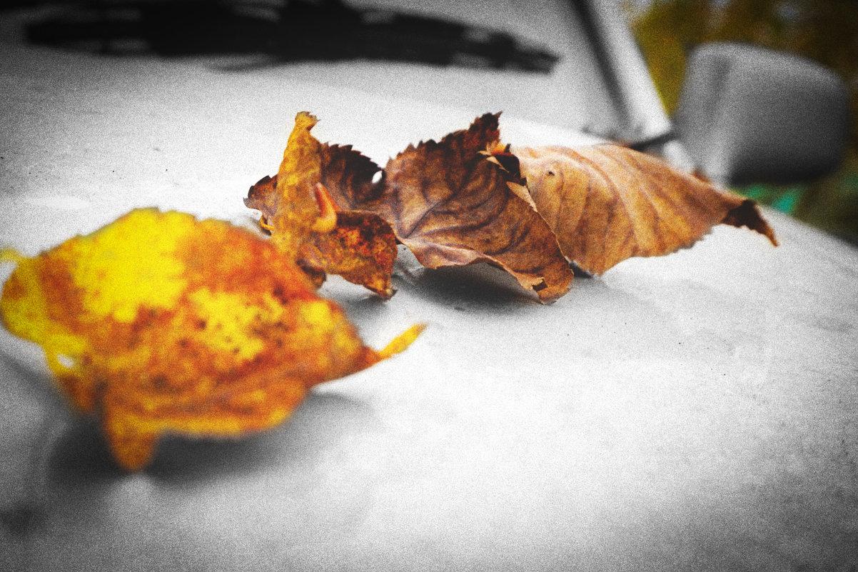 Навеяно осенью... - Арина