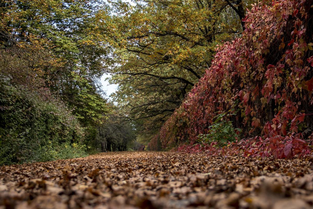 осень - валерий