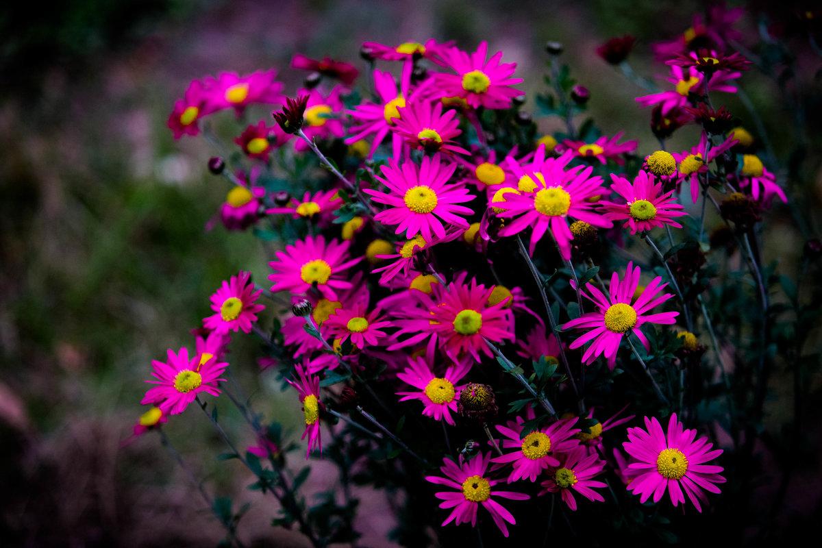 осень в моем саду. - Валерий Гудков