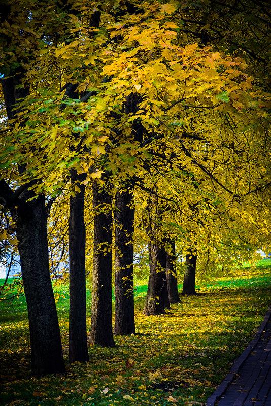 Осенние контрасты - Игорь Герман