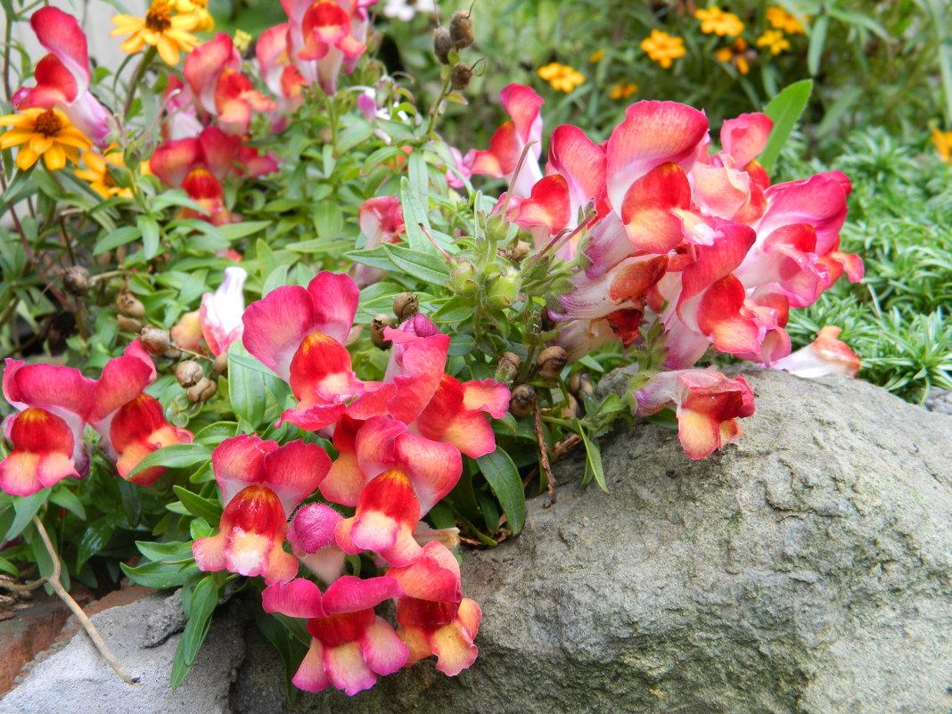 Осенние цветы - Сергей Босов