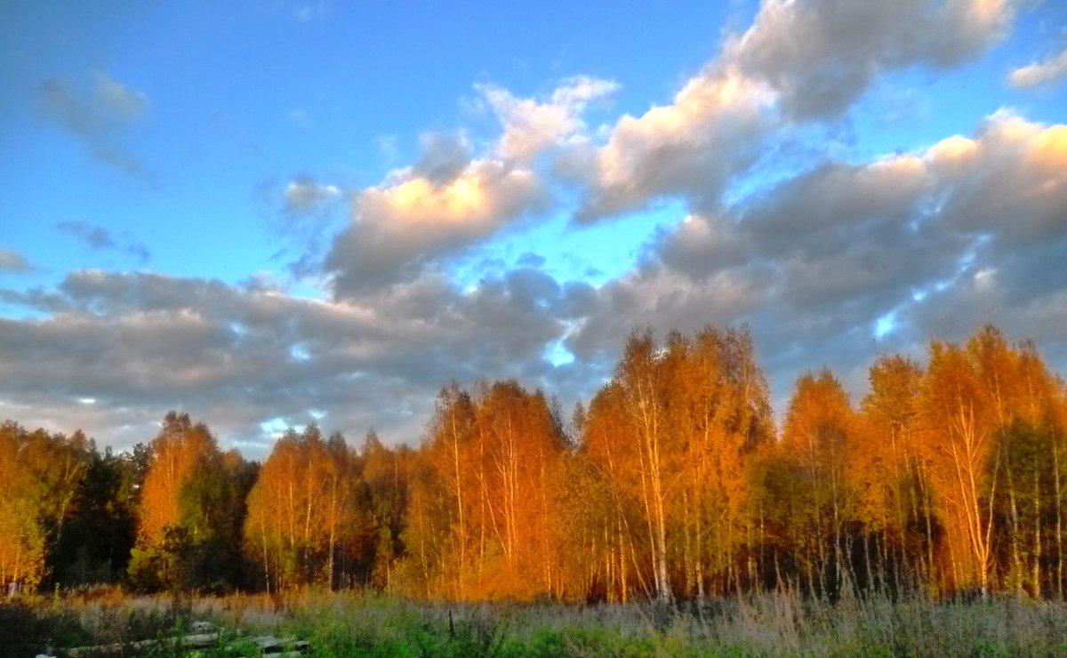 Осень - Mary Коллар