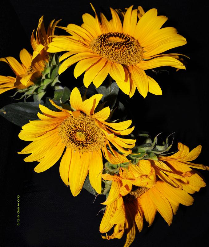 мои цветочки - Роза Бара