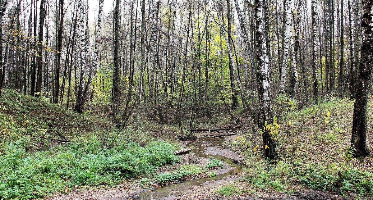 Ручей в осеннем лесу. - Борис Митрохин