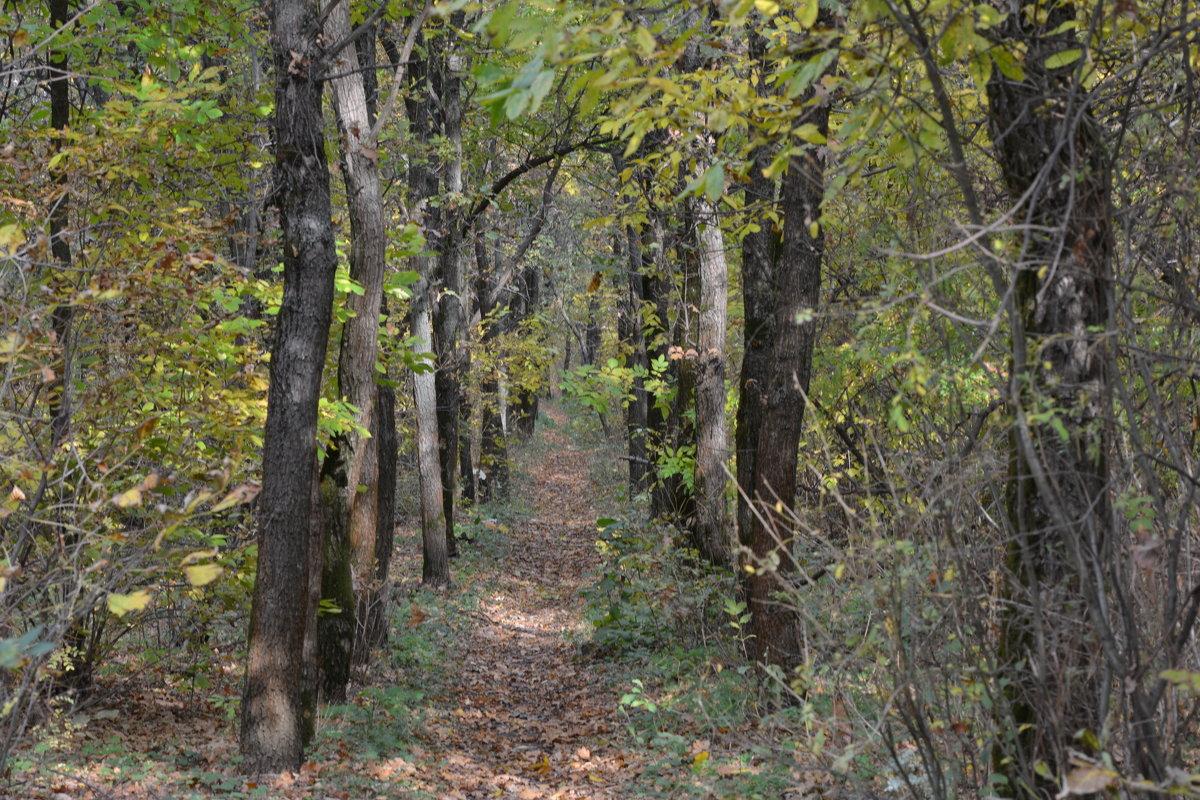 Тропинка в осеннем лесу - Дмитрий