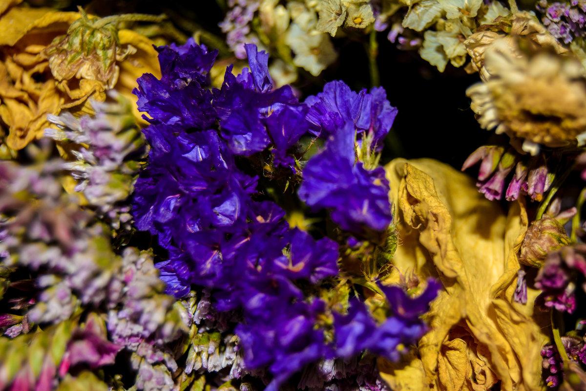 завяли цветочки - Света Кондрашова