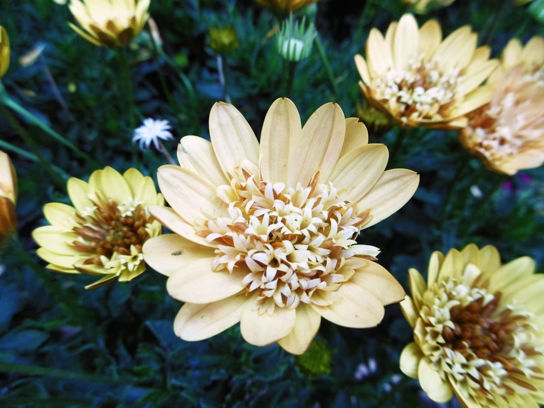 Необыкновеные цветы - татьяна