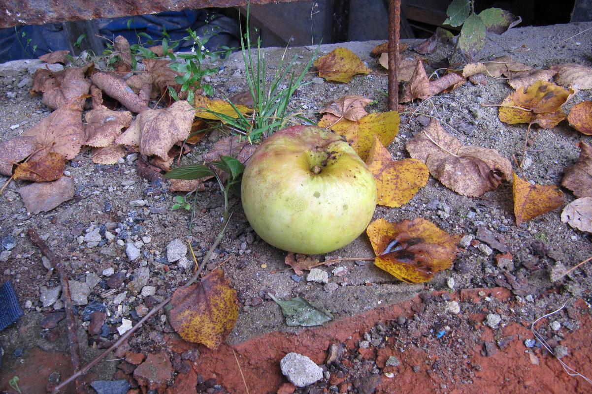 Осень и яблоко - Александр Левин