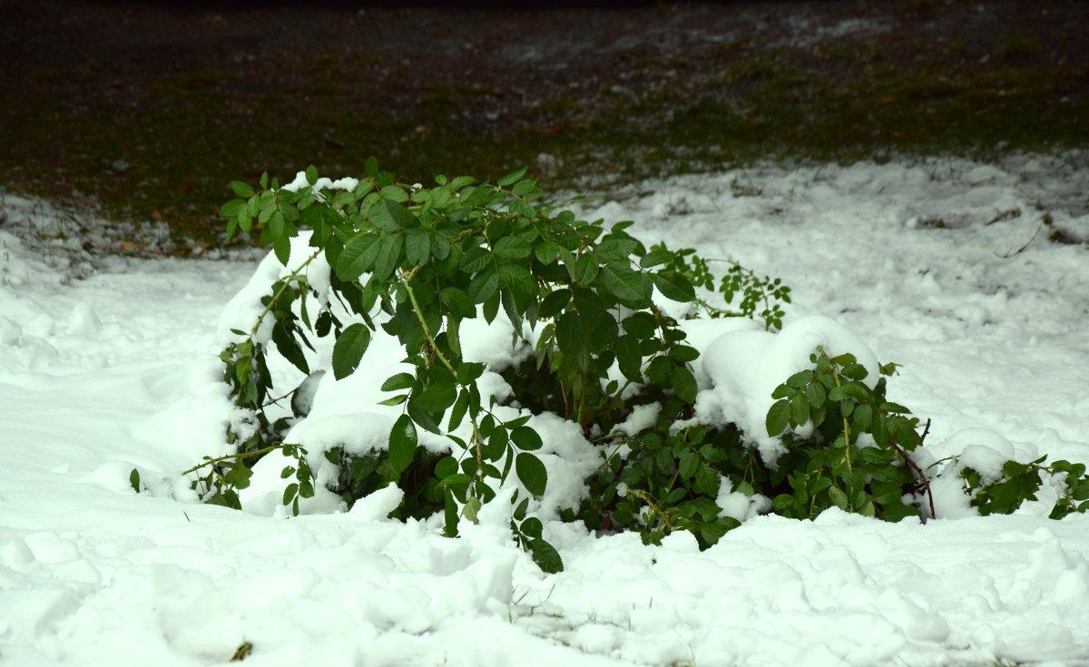 Первый снег - Bort037