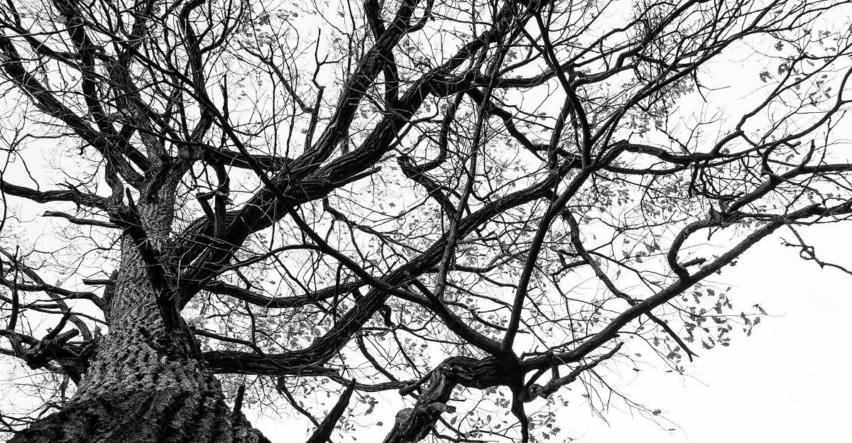 И с дубов облетает листва... - Владимир Голиков