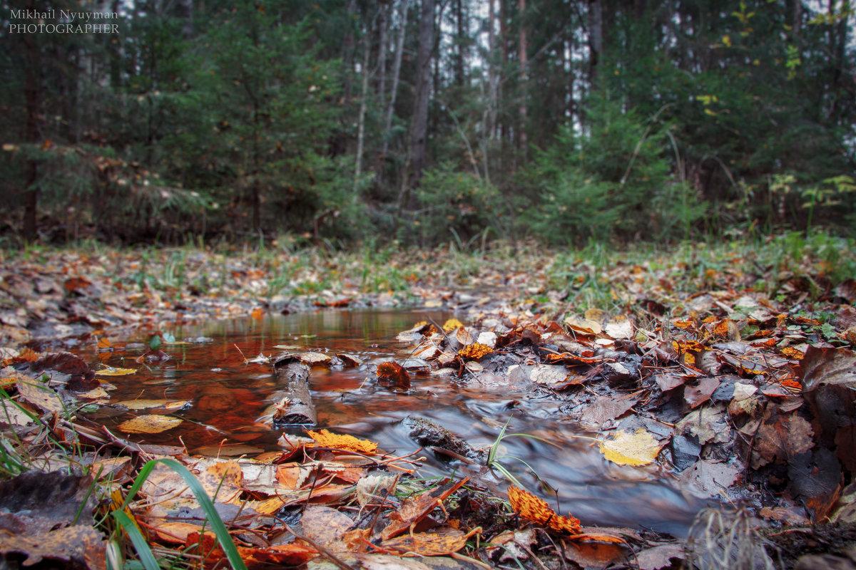 Осенний ручей - Михаил