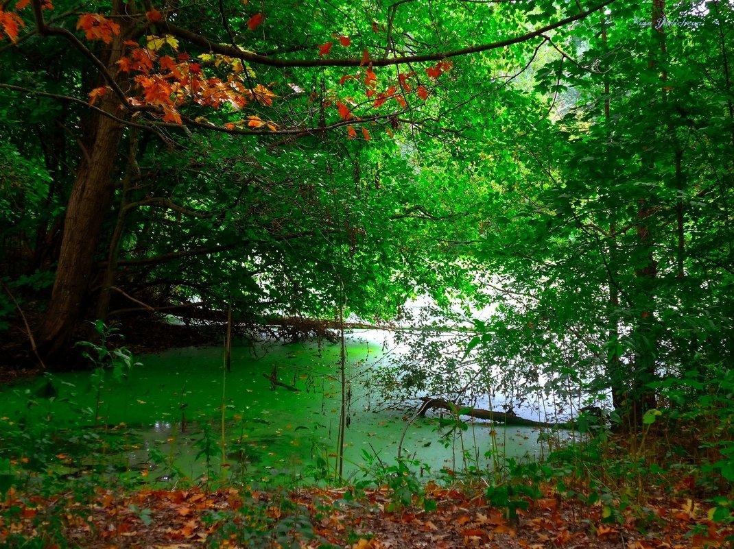 Осень на изумрудном озере - Nina Yudicheva