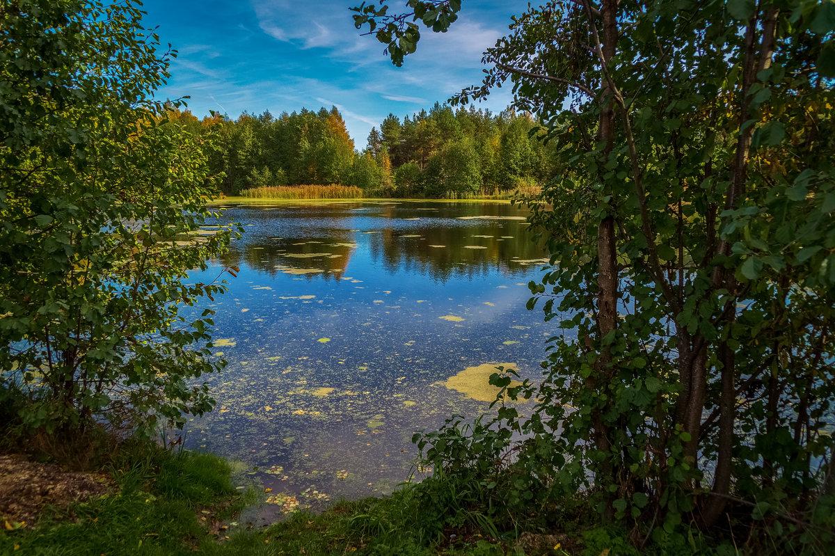 Осень на лесном озере 2 - Андрей Дворников