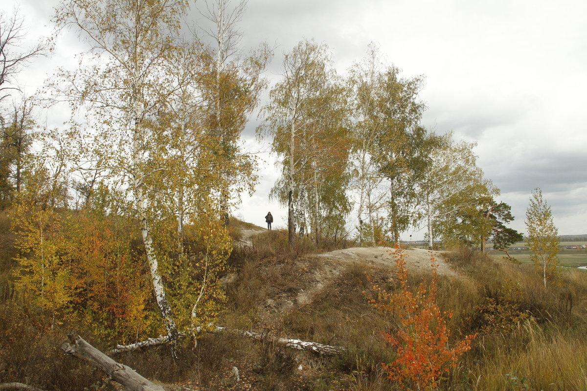 Деревья на холме - esadesign Егерев