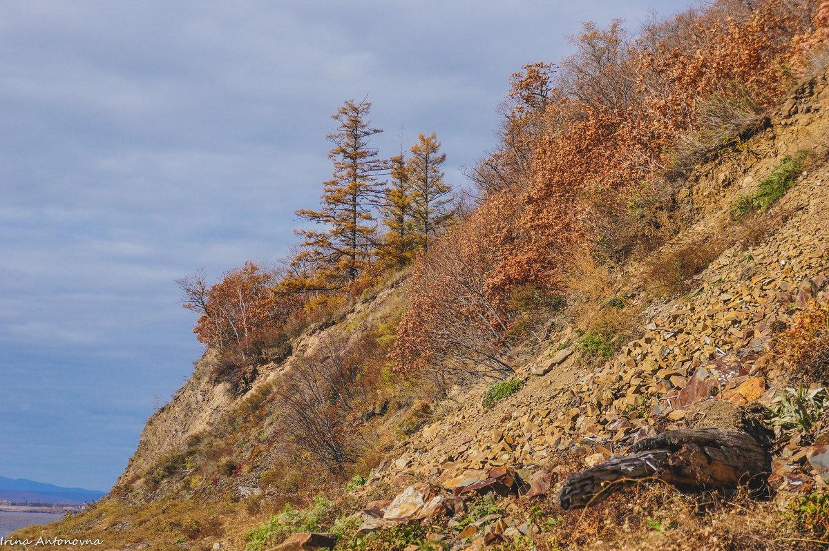 На склоне сопки, река Амур. - Ирина Антоновна