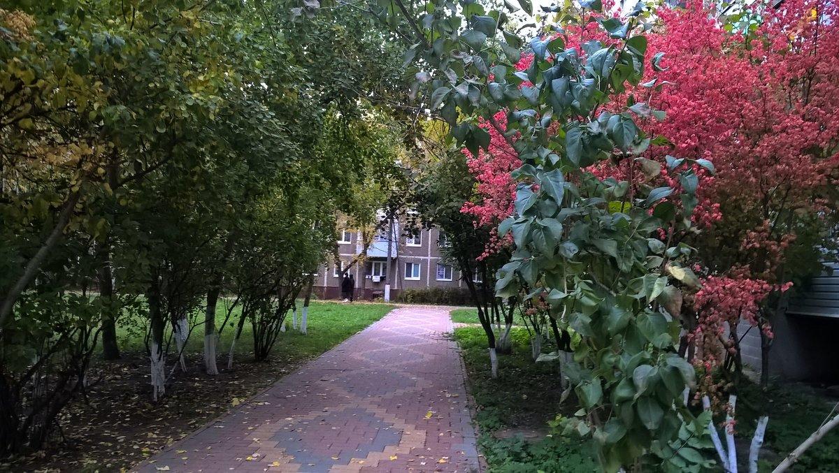 Осенняя аллея - Елена Семигина
