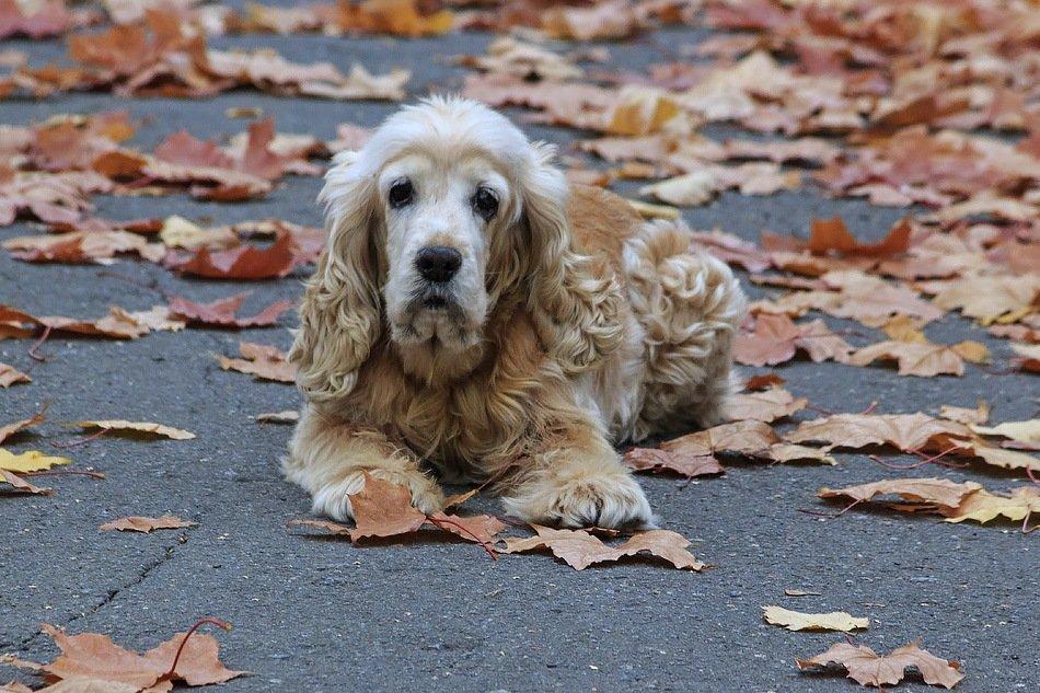 Осень жизни, как и осень года, надо, не скорбя, благословить - Ирина Приходько