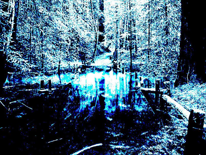 Озеро в лесу - Сергей