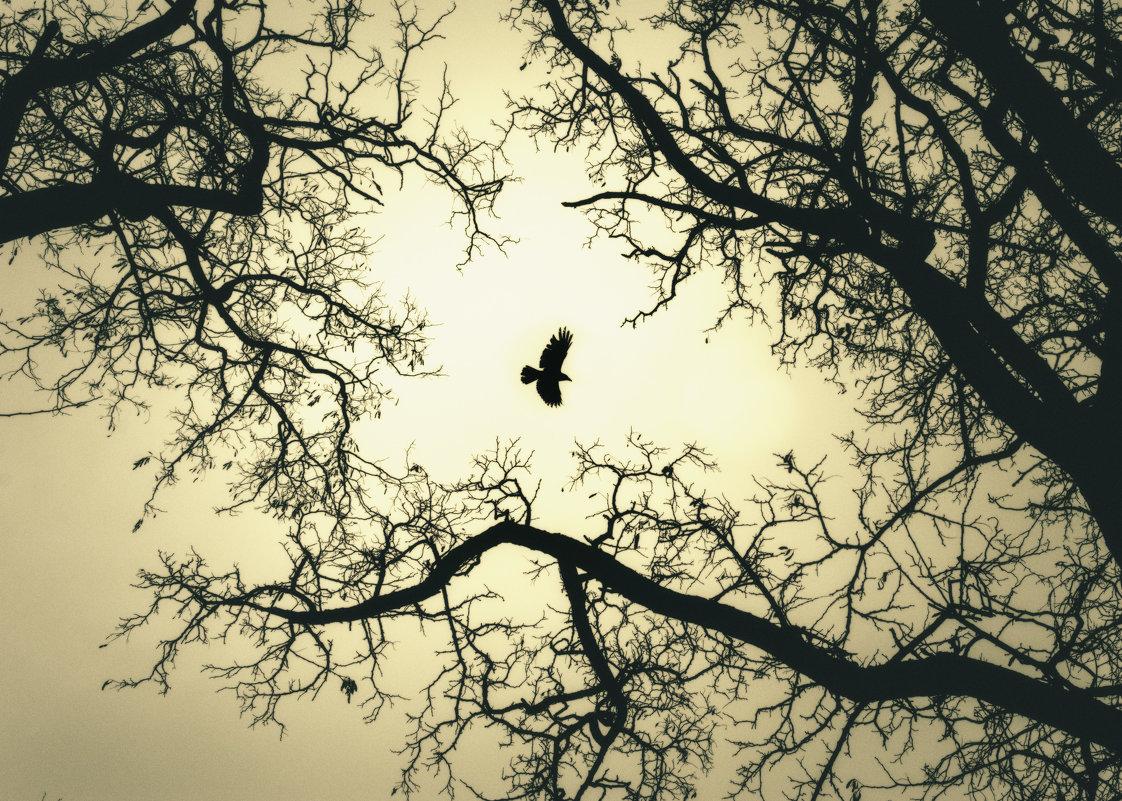 ..и вороны кружат, там где раньше был цветущий сад.. - Вадим