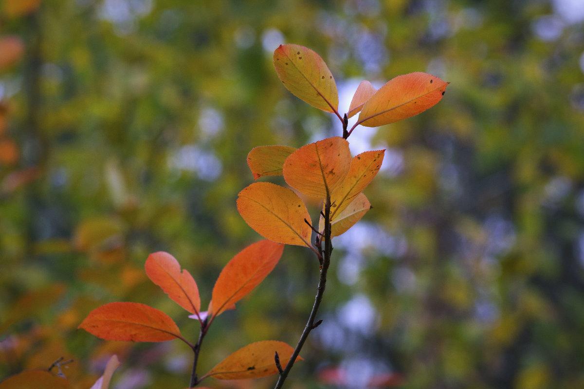 Осенние листья - Aнна Зарубина