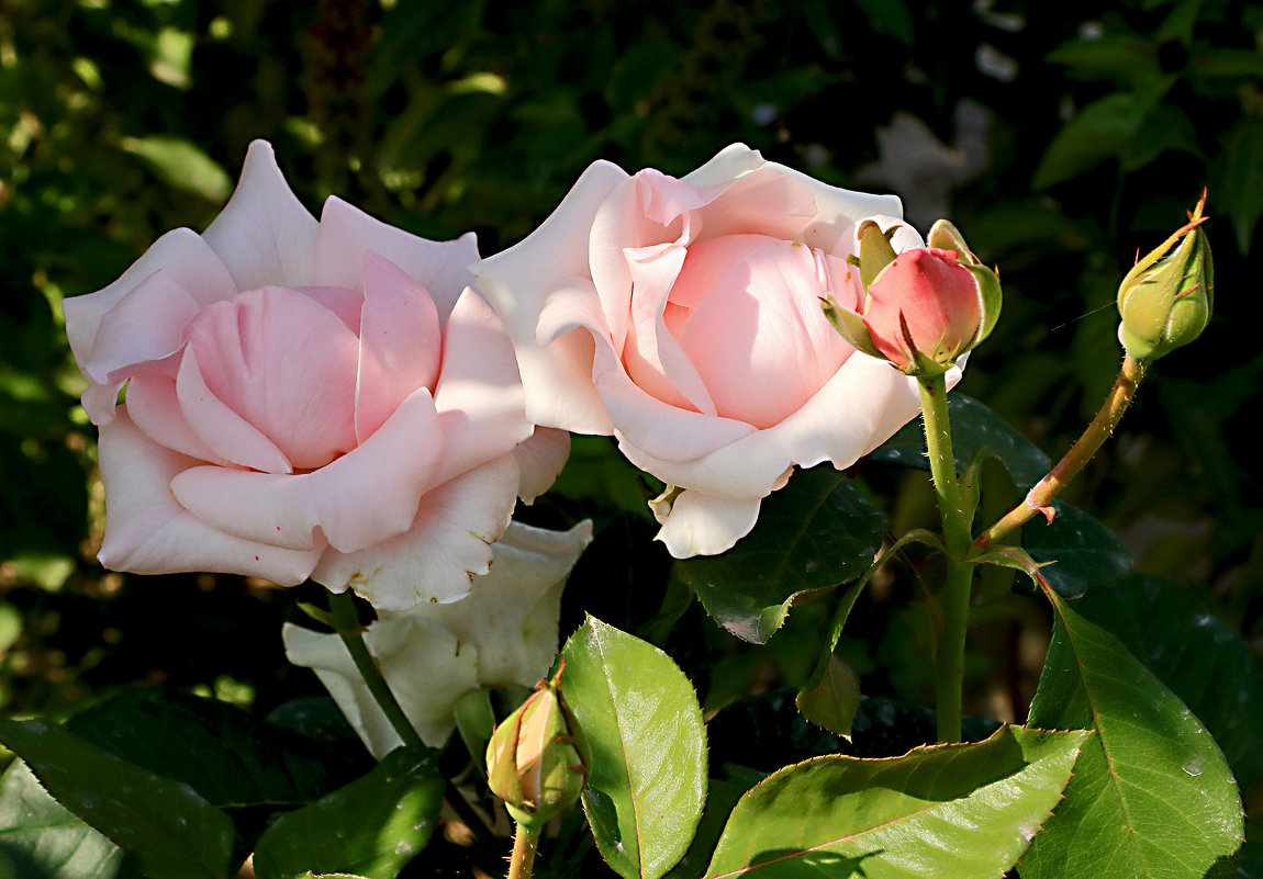 Розовая семейка - Светлана