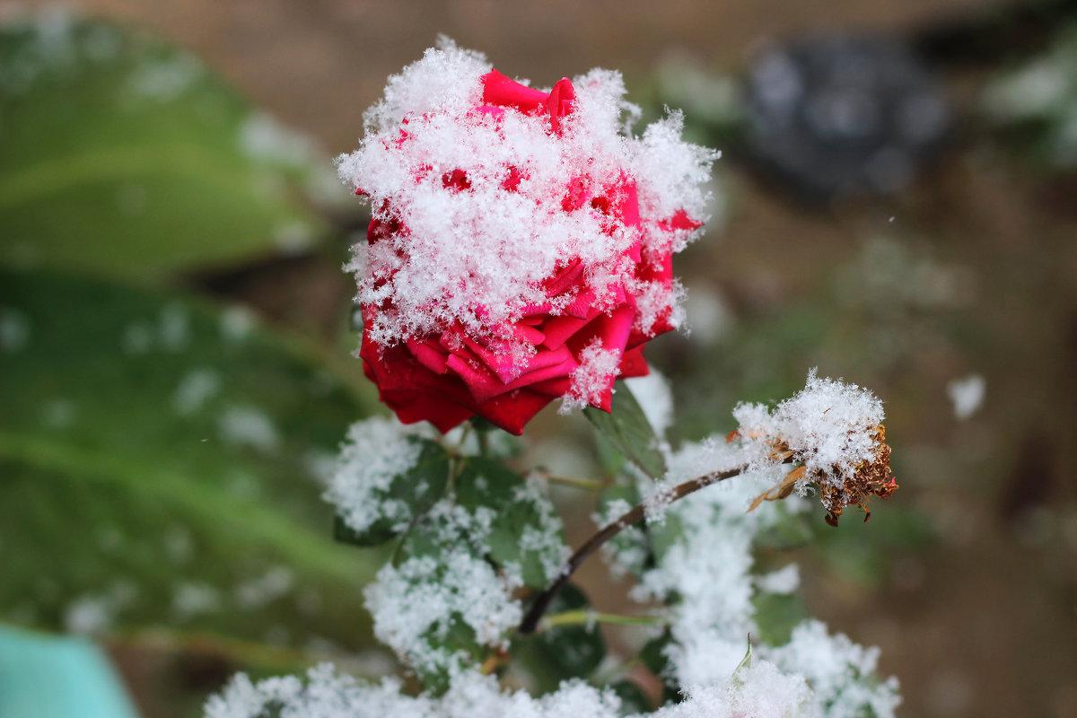 Первый снег - TATYANA PODYMA