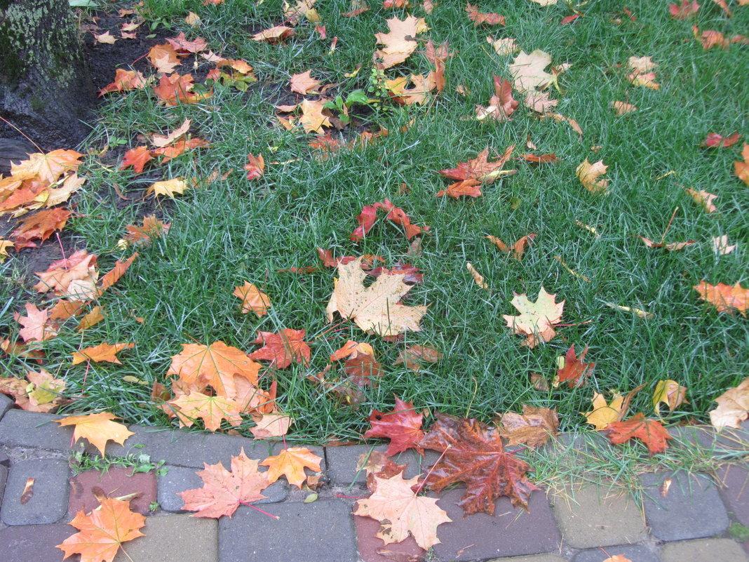 осенние листья - Герович Лилия