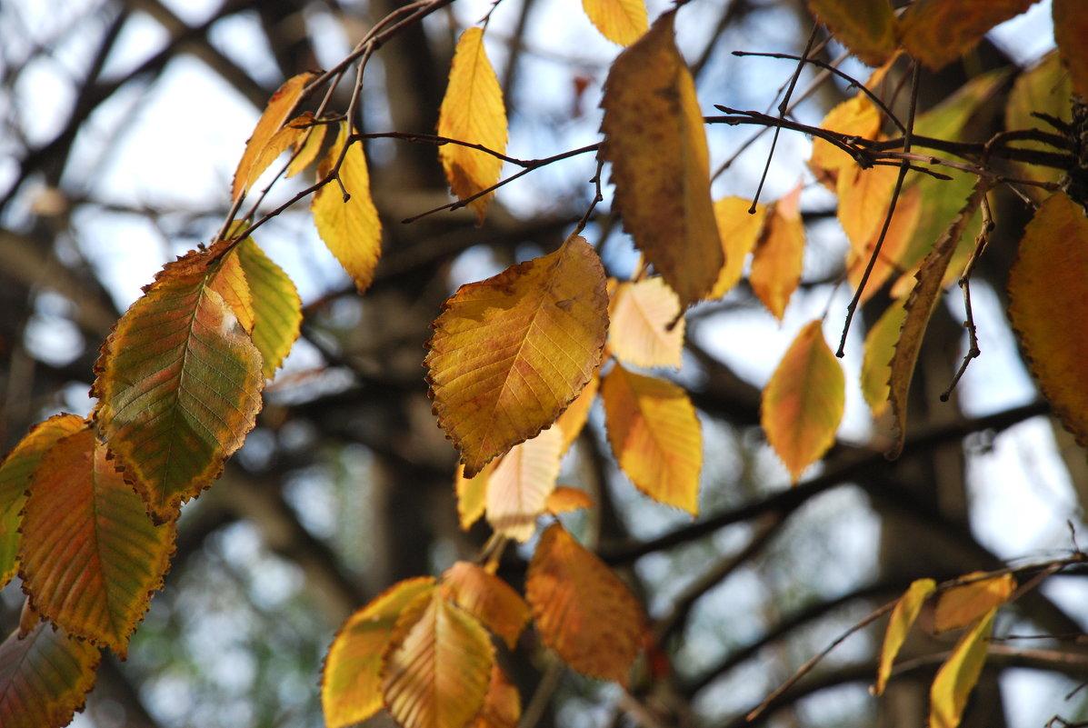 Осень. - Lara