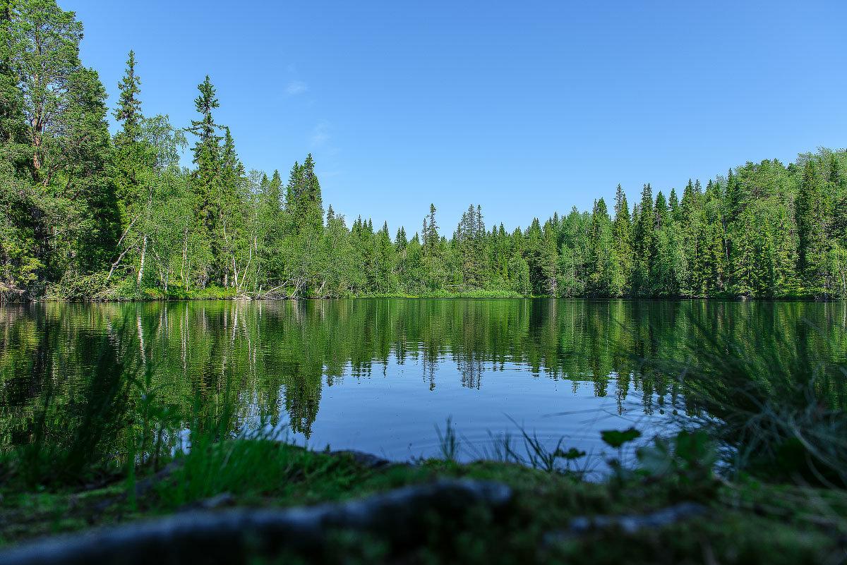 Лесное озеро. - Николай