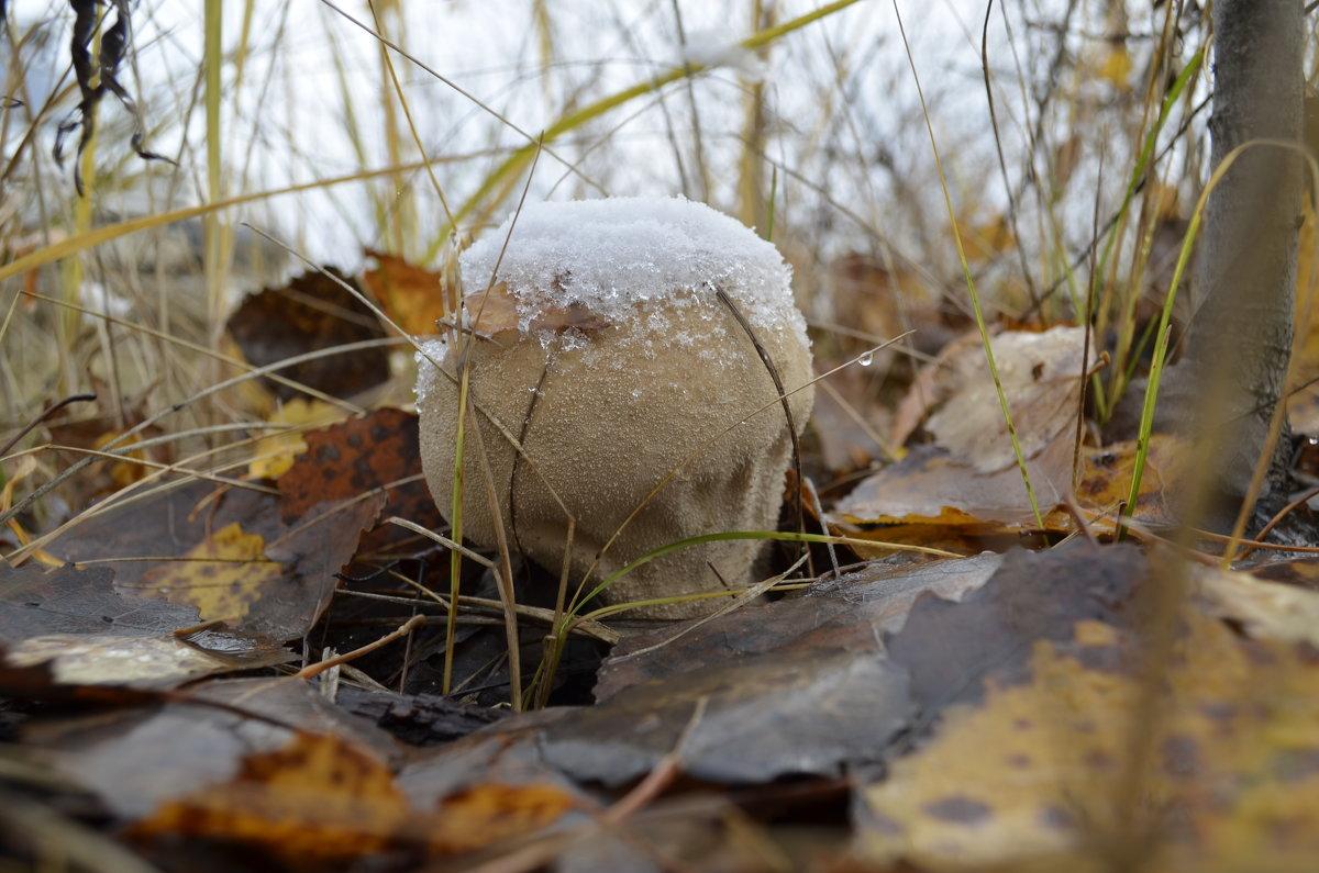 Зимний гриб - Дмитрий Н