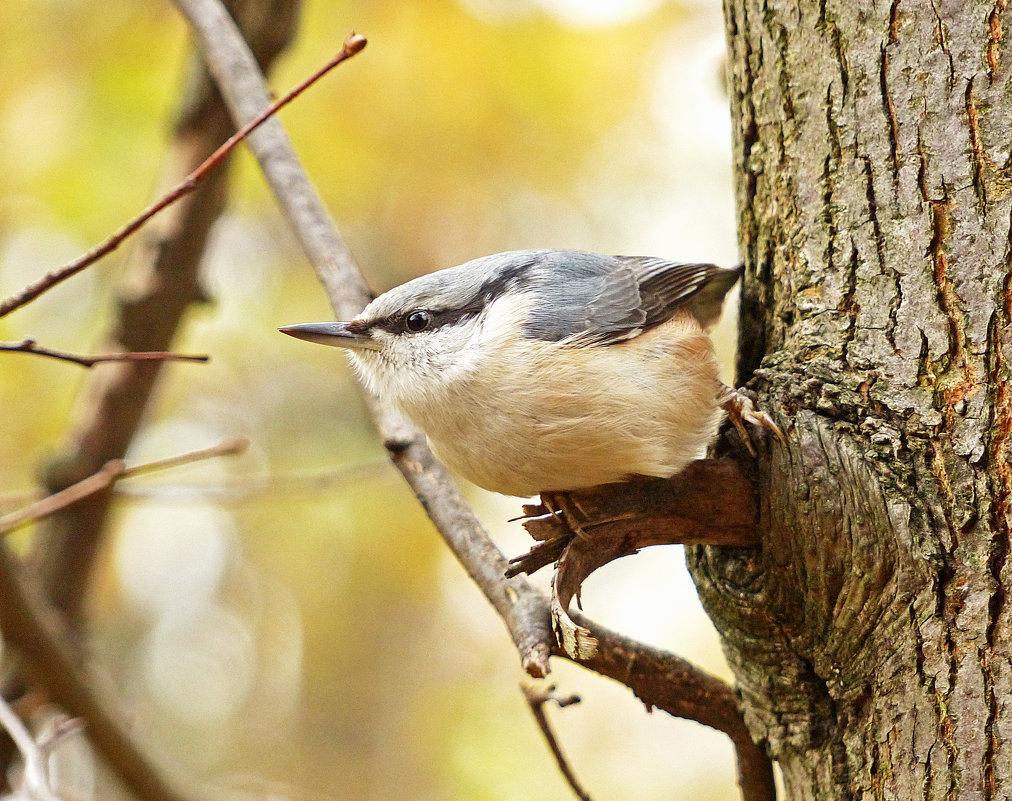 Angry bird -:))) - Александр Запыленов