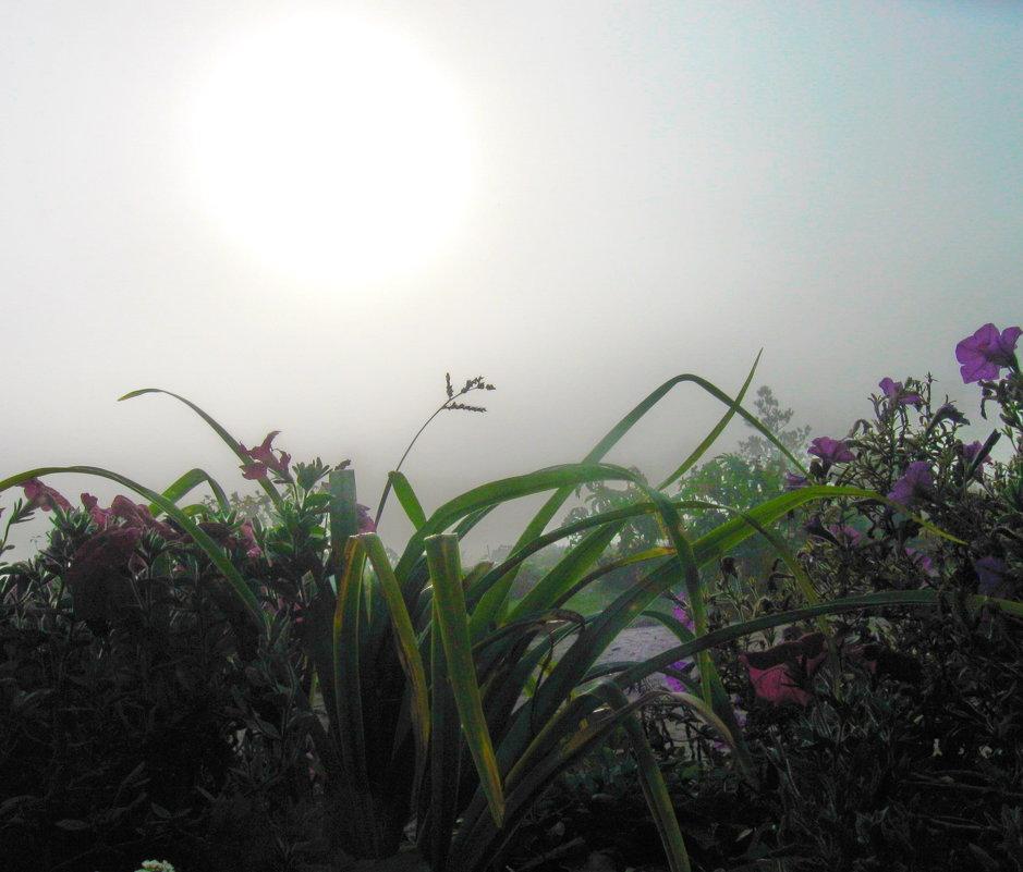 Утро туманное - Мария Богуславская