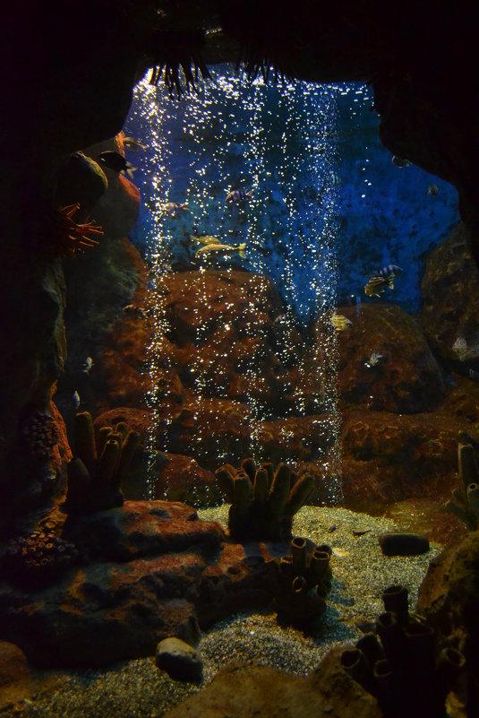 океанариум в  Адлере - Светлана