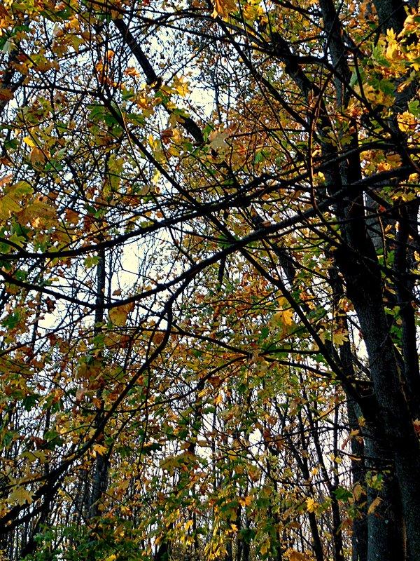 Осень в парке - Андрей Сотников