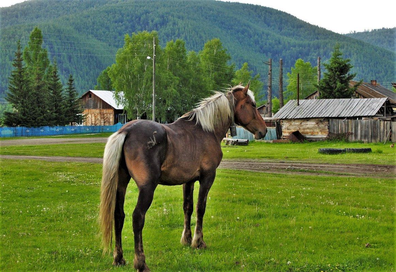 Выйду на улицу, гляну на село... - Сергей Чиняев